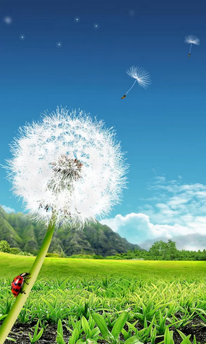 Dandelion live wallpaper for Android. Dandelion free ...
