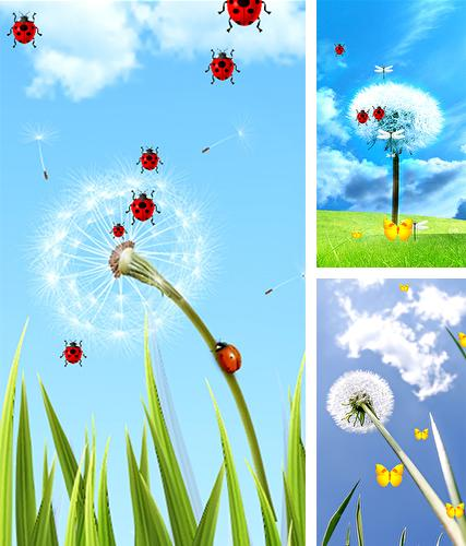 Dandelion by Latest Live Wallpapers