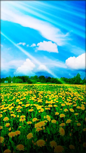 Геймплей Dandelion by Live Wallpaper HD 3D для Android телефона.