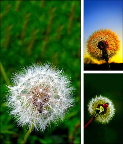 Dandelion by Live Wallpaper HD 3D
