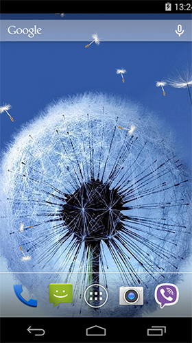 Dandelion by Wallpapers Pro