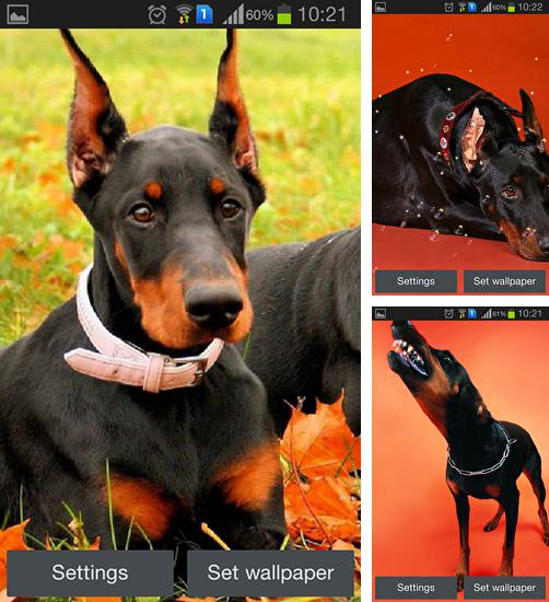 In addition to live wallpaper Venus for Android phones and tablets, you can also download Doberman for free.