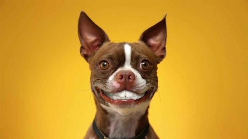 Download Dog smiles - livewallpaper for Android. Dog smiles apk - free download.