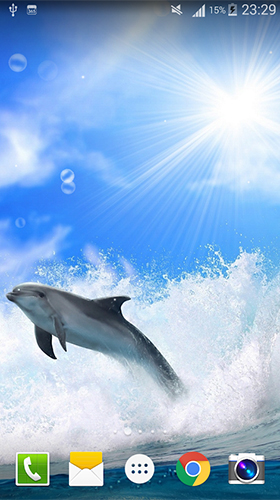 Dolphin by Live wallpaper HD