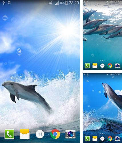 Kostenloses Android-Live Wallpaper Delphin. Vollversion der Android-apk-App Dolphin by Live wallpaper HD für Tablets und Telefone.