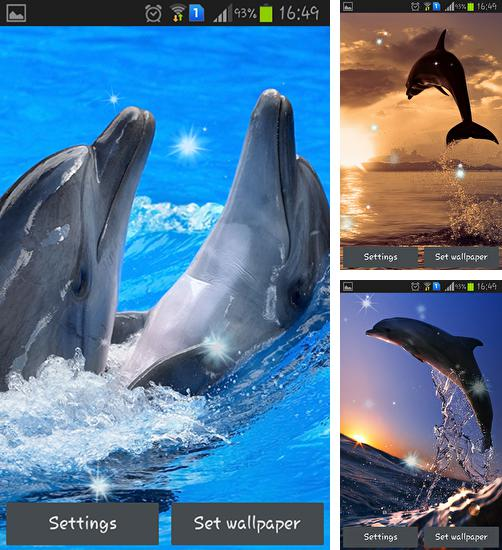 In addition to live wallpaper Dandelion by Wallpapers Pro for Android phones and tablets, you can also download Dolphins for free.