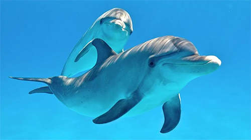 Screenshots of the Dolphins 3D by Mosoyo for Android tablet, phone.