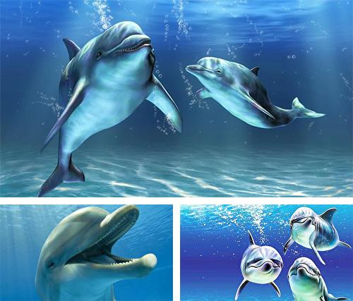 Dolphins 3D by Mosoyo