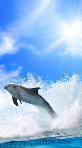 Dolphins by Pro Live Wallpapers