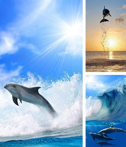 Download live wallpaper Dolphins by Pro Live Wallpapers for Android. Get full version of Android apk livewallpaper Dolphins by Pro Live Wallpapers for tablet and phone.