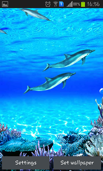 Dolphins sounds live wallpaper for Android. Dolphins sounds free download for tablet and phone.