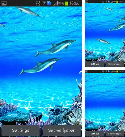 Download live wallpaper Dolphins sounds for Android. Get full version of Android apk livewallpaper Dolphins sounds for tablet and phone.
