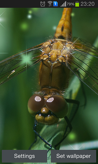 Dragonfly live wallpaper for Android. Dragonfly free ...
