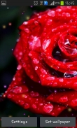 Drops and roses - download free live wallpapers for Android. Drops and roses full Android apk version for tablets and phones.