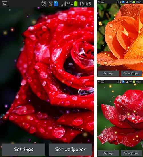 In addition to live wallpaper Hearts by Mariux for Android phones and tablets, you can also download Drops and roses for free.