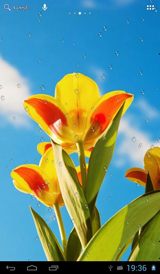 Download Drops on tulips - livewallpaper for Android. Drops on tulips apk - free download.
