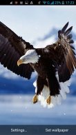 Eagle - download free live wallpapers for Android. Eagle full Android apk version for tablets and phones.