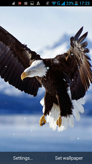Eagle Live Wallpaper For Android Free Download Tablet And Phone
