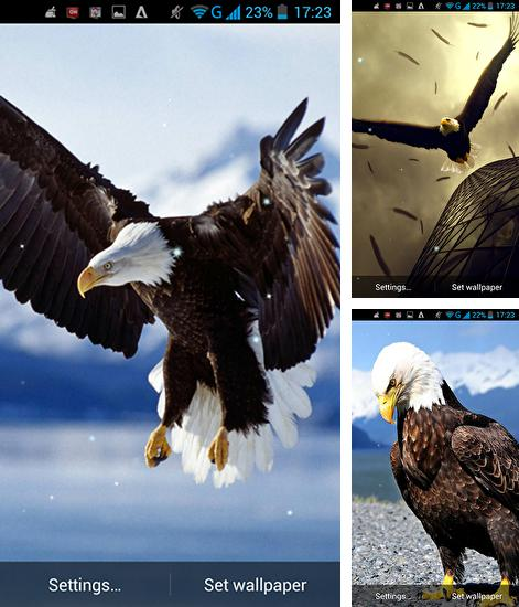 In addition to live wallpaper Beach by Amax lwps for Android phones and tablets, you can also download Eagle for free.