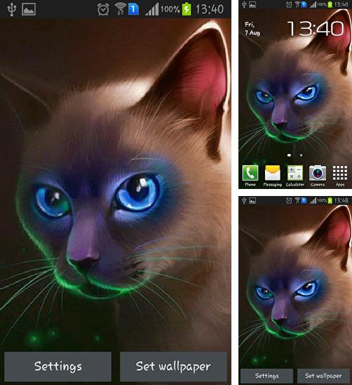 In addition to live wallpaper Aquarium: Undersea for Android phones and tablets, you can also download Egyptian cat for free.