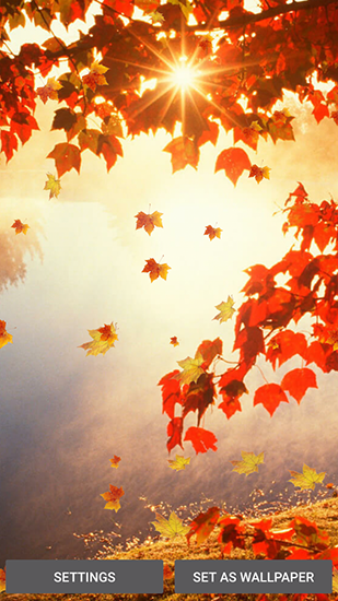 Download livewallpaper Falling leaves for Android. Get full version of Android apk livewallpaper Falling leaves for tablet and phone.