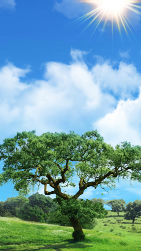 Fantastic Nature. Download livewallpaper ...