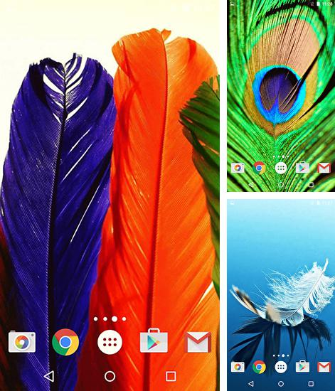 In addition to live wallpaper Nexus 6 for Android phones and tablets, you can also download Feathers for free.