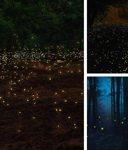 Fireflies 3D by Live Wallpaper HD 3D