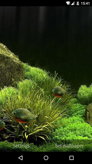 Download livewallpaper Fish aquarium 3D for Android. Get full version of Android apk livewallpaper Fish aquarium 3D for tablet and phone.