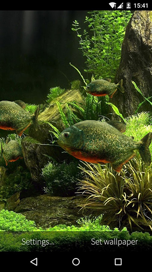 Download Fish aquarium 3D - livewallpaper for Android. Fish aquarium 3D apk - free download.