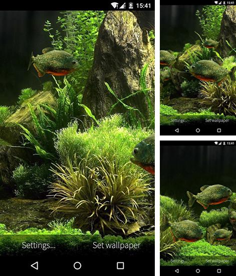 In addition to live wallpaper Beautiful night for Android phones and tablets, you can also download Fish aquarium 3D for free.