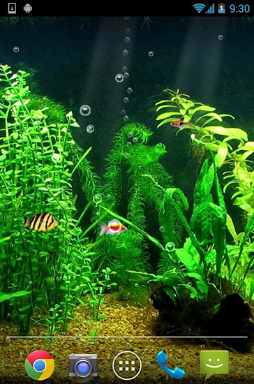 Download Fishbowl - livewallpaper for Android. Fishbowl apk - free download.