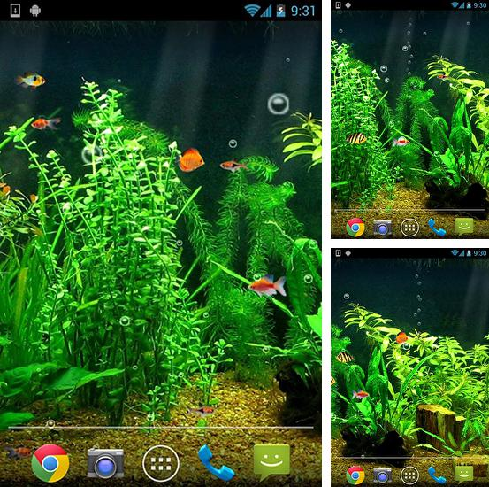 Download live wallpaper Fishbowl for Android. Get full version of Android apk livewallpaper Fishbowl for tablet and phone.