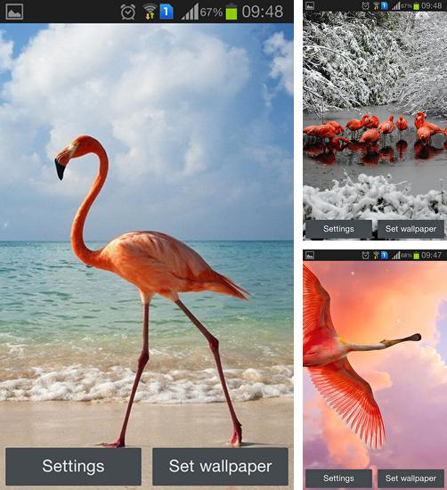 In addition to live wallpaper Lucky clover for Android phones and tablets, you can also download Flamingo for free.