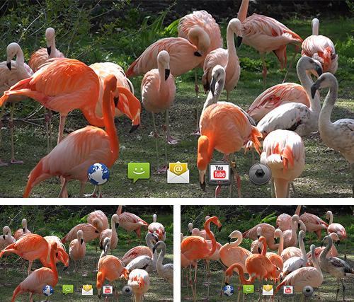 Baixe o papeis de parede animados Flamingo by 4K4U para Android gratuitamente. Obtenha a versao completa do aplicativo apk para Android Flamingo by 4K4U para tablet e celular.