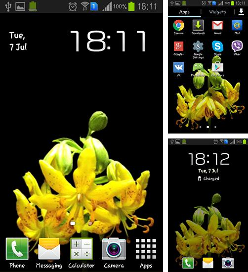 In addition to live wallpaper Shiny butterfly for Android phones and tablets, you can also download Flower bud for free.