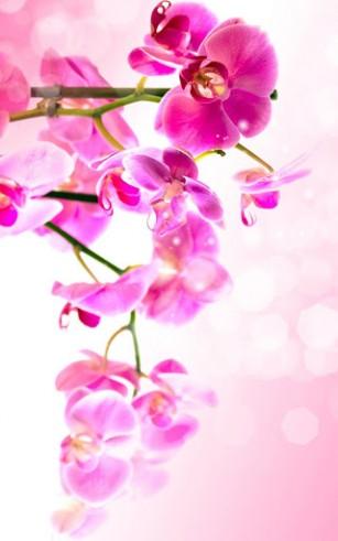 Flowers Für Android Kostenlos Herunterladen Live Wallpaper Blumen
