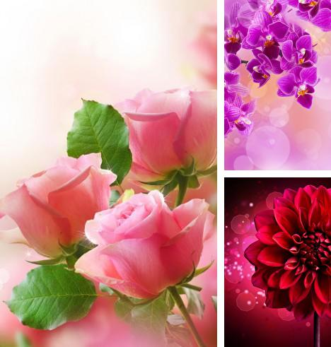 Download live wallpaper Flowers for Android. Get full version of Android apk livewallpaper Flowers for tablet and phone.