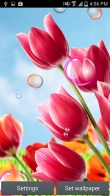 Flowers 2015 - download free live wallpapers for Android. Flowers 2015 full Android apk version for tablets and phones.