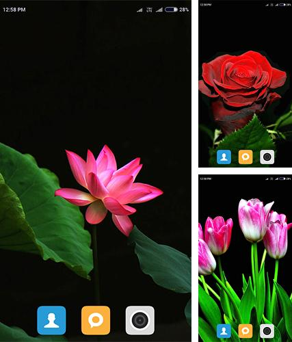 Flowers HD by Android Wallpaper Store