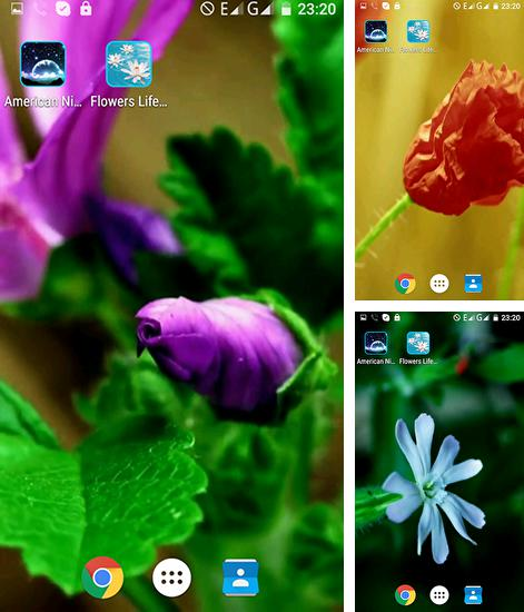 In addition to live wallpaper Electric for Android phones and tablets, you can also download Flowers life for free.