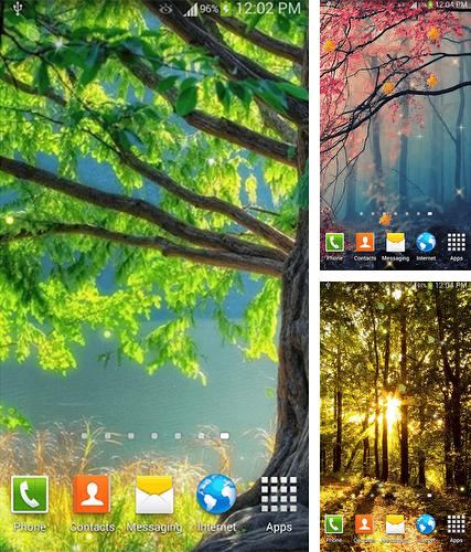 Kostenloses Android-Live Wallpaper Wald. Vollversion der Android-apk-App Forest by Dream World HD Live Wallpapers für Tablets und Telefone.