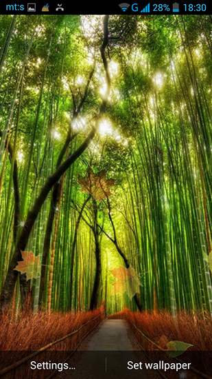 Download Forest by Pro live wallpapers - livewallpaper for Android. Forest by Pro live wallpapers apk - free download.
