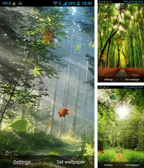 In addition to live wallpaper Teddy bear by High quality live wallpapers for Android phones and tablets, you can also download Forest by Pro live wallpapers for free.