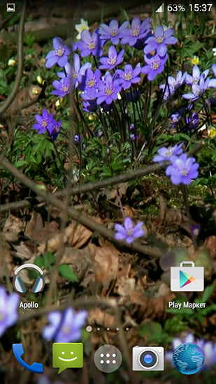 Download livewallpaper Forest flowers for Android. Get full version of Android apk livewallpaper Forest flowers for tablet and phone.