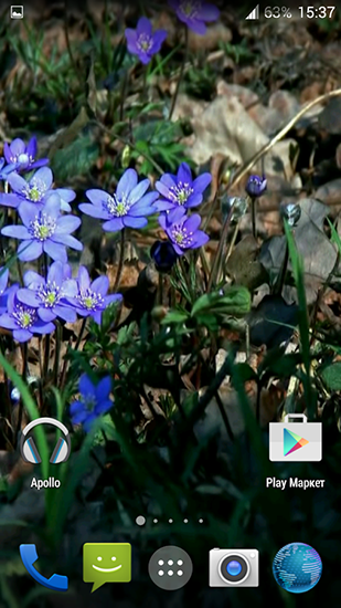 Download Forest flowers - livewallpaper for Android. Forest flowers apk - free download.