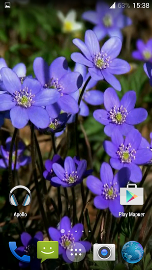 Screenshots of the Forest flowers for Android tablet, phone.