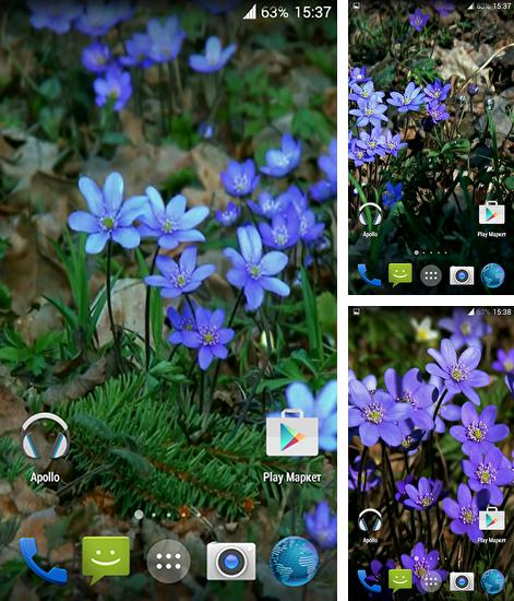 In addition to live wallpaper Nature by Creative Factory Wallpapers for Android phones and tablets, you can also download Forest flowers for free.