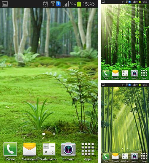 In addition to live wallpaper Dinosaurs by Dream World HD Live Wallpapers for Android phones and tablets, you can also download Forest landscape for free.