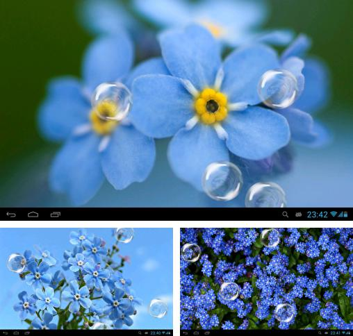 In addition to live wallpaper Love: Clock for Android phones and tablets, you can also download Forget-me-not for free.